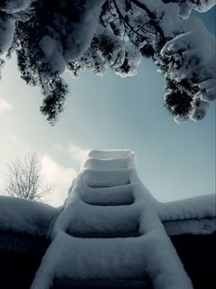 240x320 Wallpaper ladder, snow, branch, winter