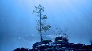 Preview wallpaper lake, tree, fog