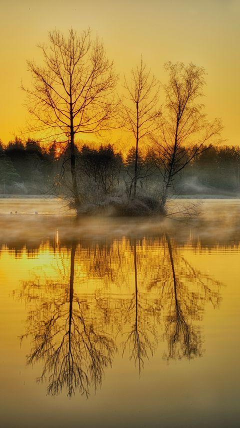480x854 Wallpaper lake, trees, fog, dusk, nature