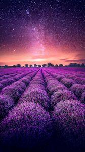 Preview wallpaper lavender, field, starry sky, horizon