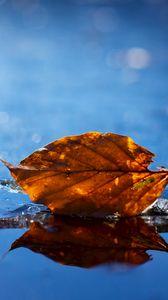 Preview wallpaper leaf, autumn, fallen, dry, water, liquid
