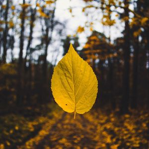 Preview wallpaper leaf, autumn, levitation, blur, yellow