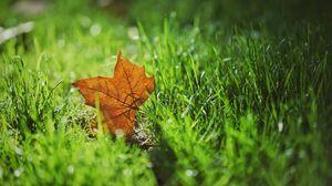 Preview wallpaper leaf, autumn, maple, grass, blur