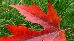 Preview wallpaper leaf, autumn, maple, dry, fallen