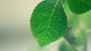 Preview wallpaper leaf, background, green, macro