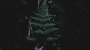 Preview wallpaper leaf, branch, dark