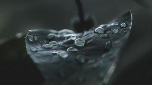 Preview wallpaper leaf, drops, macro, wet, dew, dark