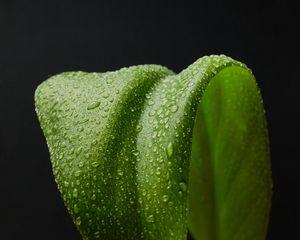 Preview wallpaper leaf, drops, macro, wet, green