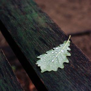 Preview wallpaper leaf, drops, macro, wet, autumn