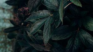 Preview wallpaper leaf, drops, plant, dark, wet