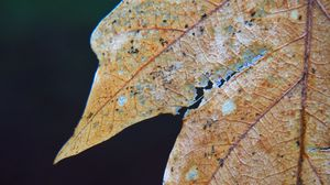 Preview wallpaper leaf, dry, autumn, macro