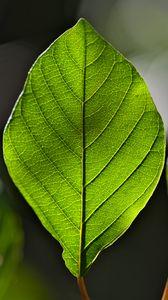 Preview wallpaper leaf, green, macro, veins