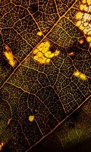 Preview wallpaper leaf, macro, surface, veins