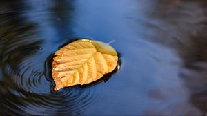 Preview wallpaper leaf, puddle, water, yellow, closeup