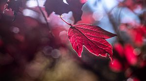 Preview wallpaper leaf, red, macro, light, glare