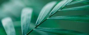 Preview wallpaper leaf, stem, macro, green