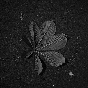 Preview wallpaper leaf, veins, asphalt, macro, black and white, black
