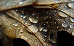 Preview wallpaper leaf, veins, drops, wet, macro