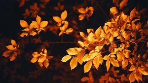 Preview wallpaper leaves, branch, autumn, blur, foliage