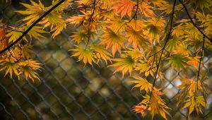 Preview wallpaper leaves, branches, fence, macro, autumn