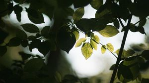 Preview wallpaper leaves, branches, ray