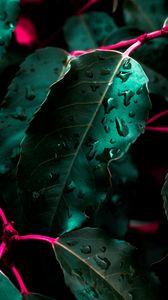 Preview wallpaper leaves, drops, bush