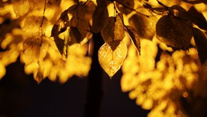 Preview wallpaper leaves, light, yellow, macro, autumn