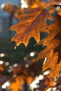 Preview wallpaper leaves, macro, brown, autumn