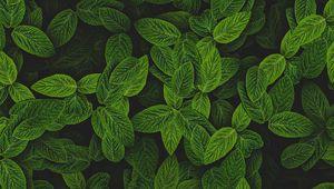 Preview wallpaper mint, leaves, plant, bushes
