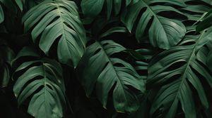 Preview wallpaper leaves, plant, green, dark, vegetation