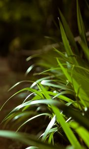Preview wallpaper leaves, plant, macro