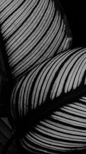 Preview wallpaper leaves, plant, stripes, macro, black and white