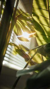 Preview wallpaper leaves, plant, sunlight, flare