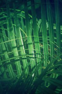 Preview wallpaper leaves, plants, green, macro