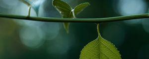 Preview wallpaper leaves, stem, green, macro, blur, bokeh