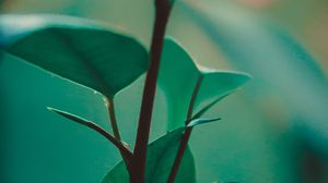 Preview wallpaper leaves, stem, plant, green, exotic