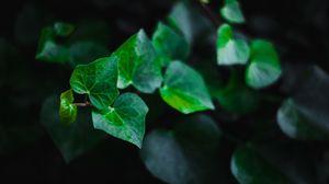 Preview wallpaper leaves, stem, plant, green, macro