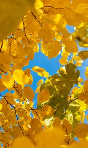 Preview wallpaper leaves, yellow, branches, autumn