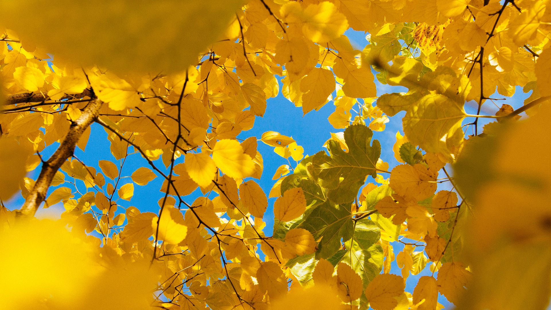 1920x1080 Wallpaper leaves, yellow, branches, autumn