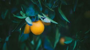 Preview wallpaper lemon, fruit, twig, leaves