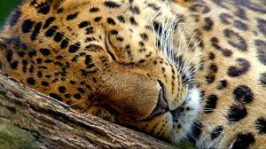 Preview wallpaper leopard, dream, face, close-up