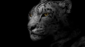 Preview wallpaper leopard, muzzle, predator, big cat, spotted, bw