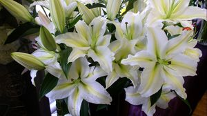 Preview wallpaper lily, flowers, white, flower, buds