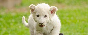 Preview wallpaper lion cub, kitten, bag