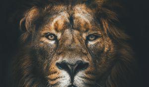 Preview wallpaper lion, muzzle, mane, loок, predator