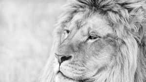 Preview wallpaper lion, muzzle, mane, eyes, predator, black white