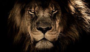 Preview wallpaper lion, muzzle, mane, predator, look