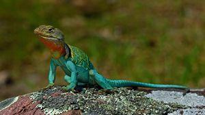 Preview wallpaper lizard, amphibian, reptile, scales