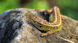 Preview wallpaper lizard, eyes, claws, stone, heat