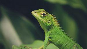 Preview wallpaper lizard, green lizard, reptile, macro, green